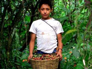 グアテマラ沖大地震SOS!コーヒー生産者の生活再建を