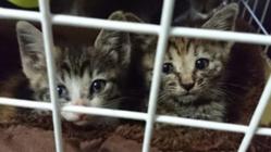70頭の保護猫たちが安心できる保護部屋の補強工事にご協力を!