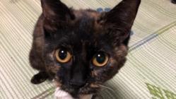 保護猫サビィちゃんに右前脚の手術をうけさせてあげたい