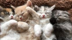 コロナ危機。茨城の猫カフェ&保護活動存続のご支援のお願いです