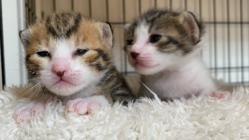 譲渡型保護猫カフェに、新たな施設『保護シェルター』を作りたい