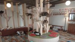 ☆札幌猫カフェ『らぶねこ』にご支援お願いします☆