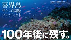 """サンゴの""""今""""を喜界島で記録!100年後に残る図鑑を作りたい"""