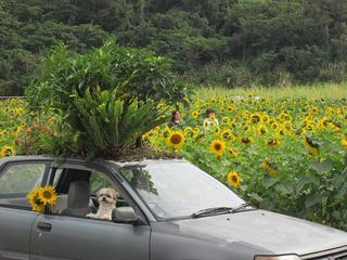 ジャングル・カーで日本縦断キャラバンに行きたい!