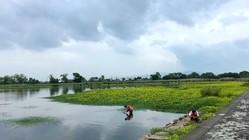 日本の自然環境を守るため。外来水生植物を抑制する技術を開発!