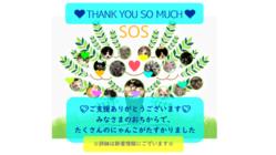 ☆SOS☆のらねこレスキュー☆