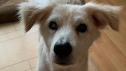 梅ちゃん(保護犬)の腎臓及び腎臓内腫瘍摘出手術費のご支援