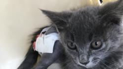 大腿骨骨折の保護猫を助けたいのでご協力お願いいたします!
