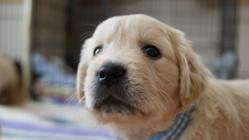 社会で支える盲導犬。視覚障害者のパートナー犬をもっと身近に!