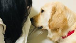 虐待や性被害を受けた子ども達へ。司法の場に付き添う犬で安心を