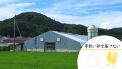 本宮烏骨鶏を東日本大震災前の平飼いに戻したい!