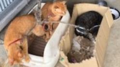 多頭飼い崩壊により保護した猫たちに、安住の地を確保したい
