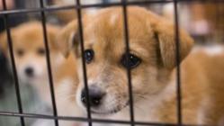 閉鎖危機!保護犬を生かし幸せを掴む施設存続にご支援のお願い!
