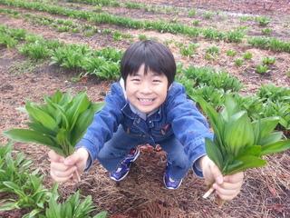 幻の山菜「行者ニンニク」の生産量を増やす散水設備を購入したい