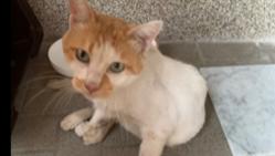 猫エイズ白血病 陽性発症 助けてあげたい!力をかしてください