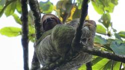 多くの生物が住むコスタリカの自然保護区の森を守りたい