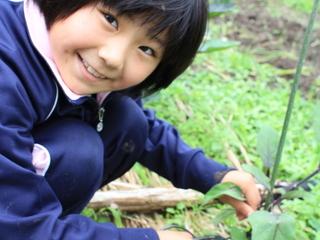 天城に大豆畑を借りて子どもたちと一緒に農業体験をしたい!