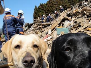 愛犬を災害救助犬・訪問活動犬にするための訓練場を整備したい!
