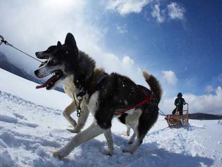 北海道の山の廃校に犬ぞりとカヌーによる地域活性の拠点を作る!