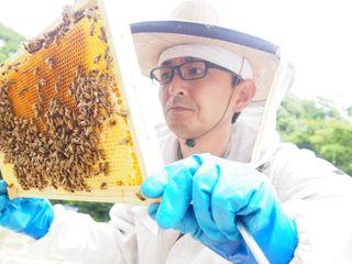 養蜂業界に革命!ITシステムを活用して美味しい蜂蜜を生産する!