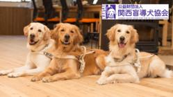 コロナで街頭募金やイベントが中止!盲導犬と引退犬の医療費にご支援を