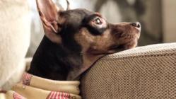 保護犬を幸せわんこに。 重度の心臓病が見つかった愛犬の手術をしたい