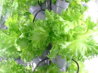 食糧危機も救う!?安心安全の水耕野菜が作れる新型植物工場を!