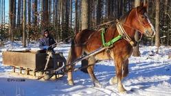 人と馬との共生を目指して 希少馬 由美子の観光馬車を走らせたい!!