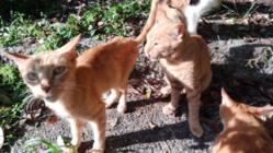 空き家に捨てられ栄養失調の猫達を保護する猫舎と不妊手術ワクチンを