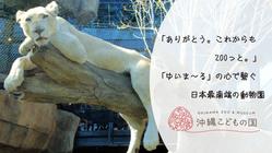 沖縄こどもの国|「ゆいま~る」の心でつなぐ、動物園応援プロジェクト