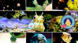 楽しく学べる!ヨコハマおもしろ水族館~生き物たちからのヘルプ~