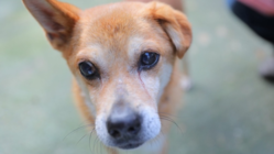 保護した犬猫をしあわせ家族につなぐ。ボランティアにやさしい医療拠点