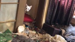 必死で生き延びている猫たちを助けたい!多頭飼育崩壊救済活動に力を。