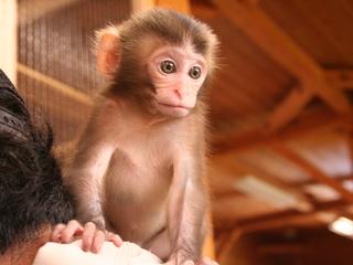 動物たちを癒す大内山動物園!保護した仔猿の住み家を建てたい!