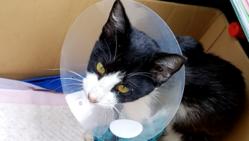 交通事故で左前脚を負傷した猫の治療費用を支援ください。