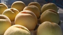 岡山特産の白桃無添加手作りジャムを皆さんに届けたい。