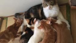 保護猫14匹の為のマイハウスを造りたい