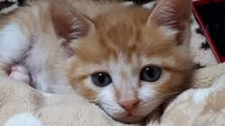 33匹の保護猫。検査・治療費、避妊去勢手術費のご支援をお願いします