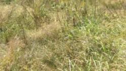広島の山奥で稲作始めます