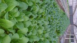 日本の農業を守るために若い世代が参入しやすい環境を作りたい