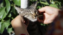 【猫基金】にご支援を|猫と人間、動物と人間が共に生きられる社会へ。