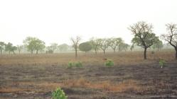 ガーナで炭窯2基作るも失敗、職人の指導で真の窯を造りたい