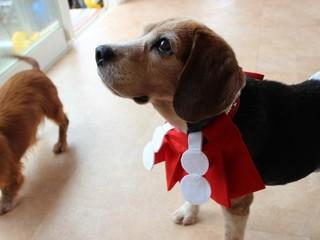 一生のパートナーに出会えるドッグラン!大阪の動物保護譲渡施設