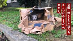 愛知県東三河で558匹の猫たちの命を守り続けるために。