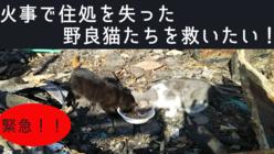 火事で行き場を失った猫たちを救いたい!