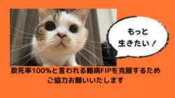 猫伝染性腹膜炎(FIP)を発症したぽてとを助けたい。