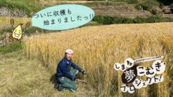 棚田百選の地を復活させたい!しまね発の低アレルゲン化小麦栽培