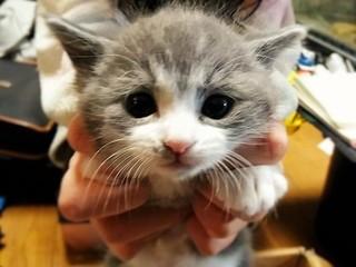 ~ライブチャットで里親探し配信~保護猫を生涯安心の生活へ!