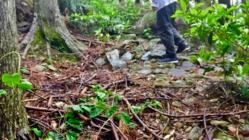 未登録の熊野古道を修復し、世界遺産候補にしたい!