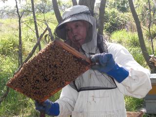 養蜂を30年続けている父のおいしいアカシアはちみつを届けたい
